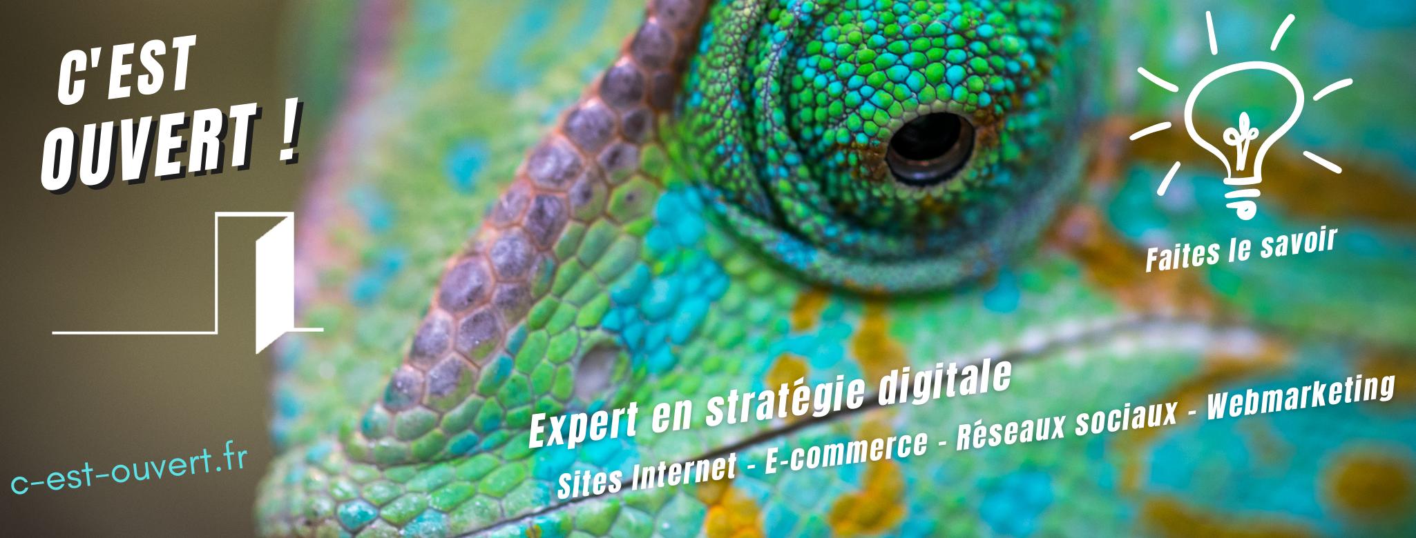 Expert en stratégie digitale C'est ouvert ! Vincent RIOT